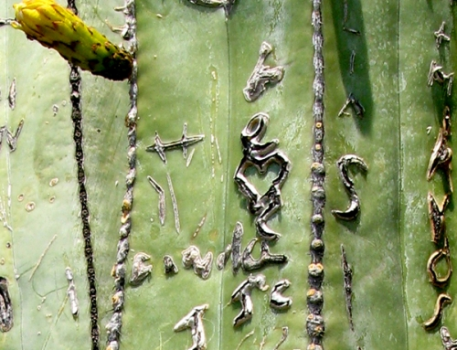 Cactus Graffiti Mexico